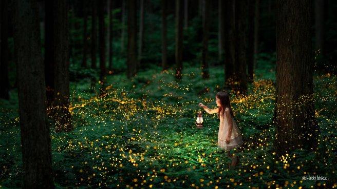 photographs-of-fireflies-at-night-by-hiroki-ishikura